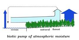 Biotic pump of atmospheric moisture