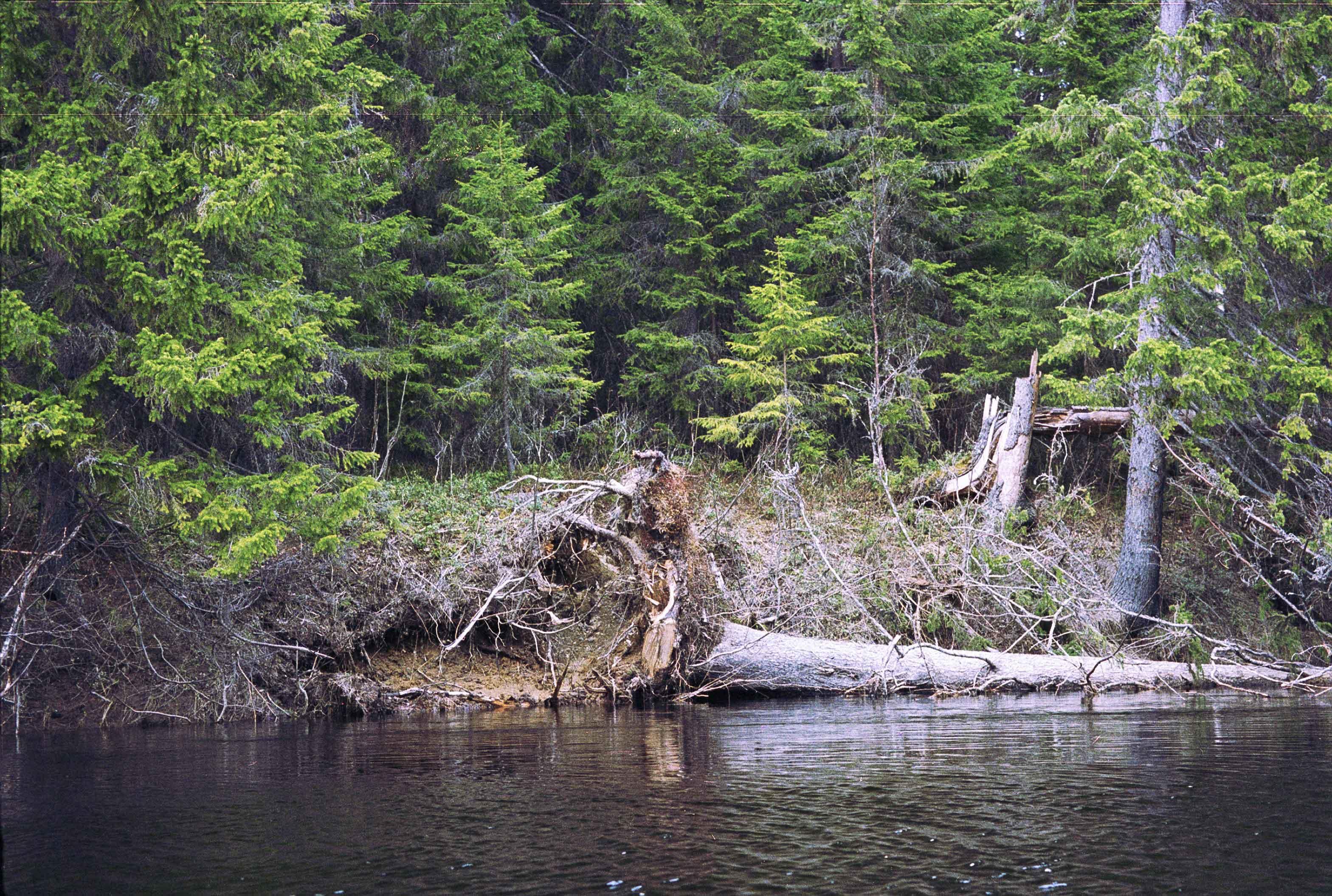 картинки река и лес