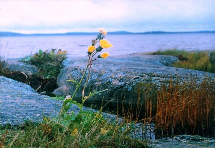 Последние цветы скачать торрент